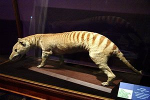 Animais extintos
