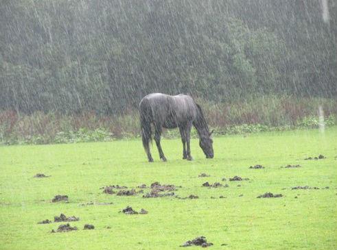 Tirar o Cavalo da Chuva